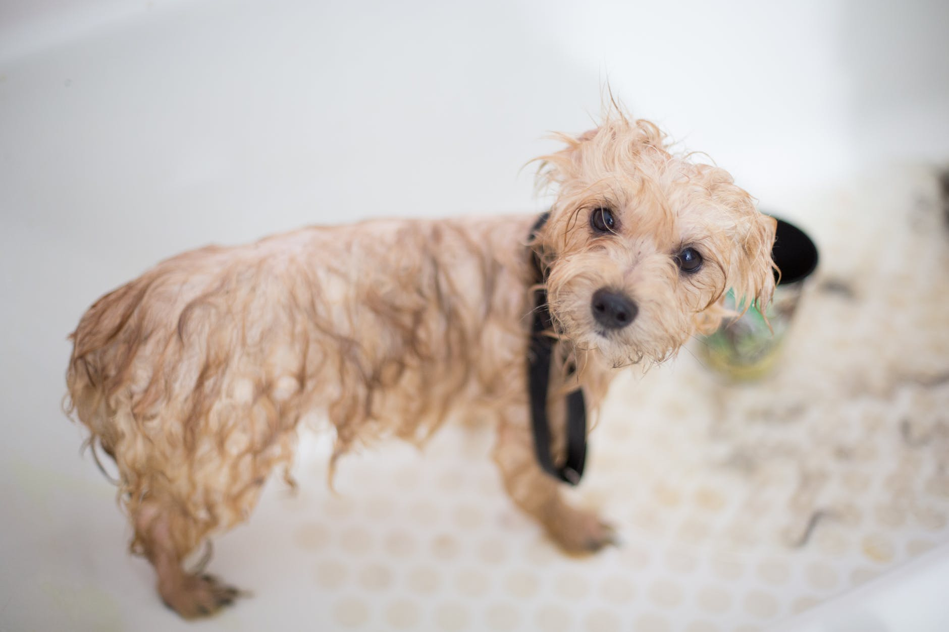 Pet Soap: Keep The Pet Clean And Shiny